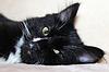 Gato negro durmiendo en el sofá | Foto de stock