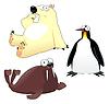 Walross, Pinguin und Bär