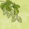 Hop Ornament On Green Grunge Background,