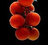 Oddział pomidorkami cherry | Stock Foto