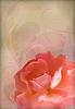 Rose Vintage alten Papier Textured Background | Stock Vektrografik