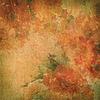 꽃과 빈티지 배경 (장미) | Stock Illustration