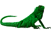 Leguan | Stock Vektrografik