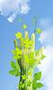 Koncepcja ekologii | Stock Foto