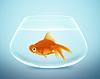 ID 3524169 | Goldfische im Schälchen | Foto mit hoher Auflösung | CLIPARTO