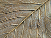 Autumn leaf abstract texture | Stock Foto