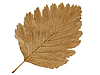 Herbstliches Blatt | Stock Foto