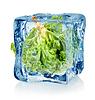 Eiswürfel und Salat   Stock Foto