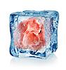 Eiswürfel-und Schweinefleisch | Stock Foto