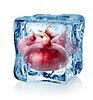 Ice Cube und roten Zwiebeln | Stock Foto