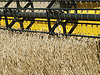 ID 3574743 | Wheat field harvesting with agricultural machinery | 높은 해상도 사진 | CLIPARTO