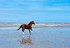 马 | 免版税照片