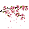 Sakura blossom - Japanese cherry tree | Stock Vector Graphics