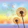 Blumen Löwenzahn auf Hintergrund des Sonnenuntergangs | Stock Vektrografik