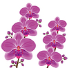 Exotische Blume Orchidee | Stock Vektrografik