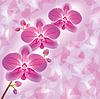 Einladung oder Grusskarte mit Orchidee in grunge