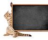 Kätzchen mit Tafel für Ihren Text | Stock Foto