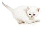 ID 3657086 | Aktive kitten - einen Monat alt | Foto mit hoher Auflösung | CLIPARTO