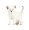 ID 3657089 | British kitten | Foto mit hoher Auflösung | CLIPARTO
