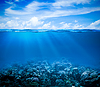 Underwater coral reef seabed view with horizon and | Stock Foto