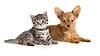 ID 3659004 | Welpen und Kätzchen liegend zusammen. Katze und Hund | Foto mit hoher Auflösung | CLIPARTO