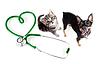 ID 3659095 | Veterinary für Katzen, Hunde und andere Haustiere Konzept | Foto mit hoher Auflösung | CLIPARTO