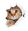 Кошка смотрит сквозь разрыв в бумаге | Фото