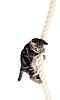 Забавный котенок висит на веревке | Фото
