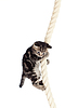 Lustige Miezekatze hängend an einem Seil | Stock Foto