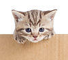 Little kitten in cardboard box | Stock Foto
