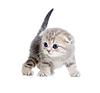 ID 3660949 | Baby Katze einen Monat alt | Foto mit hoher Auflösung | CLIPARTO