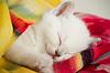 Gatito durmiendo | Foto de stock