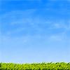Grünes Gras und blauer Himmel | Stock Illustration