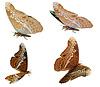 3D-Admirals-Schmetterling | Stock Illustration