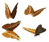3D-Admirals-Schmetterling   Stock Illustration