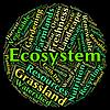 La palabra de los Ecosistemas del biosistema muestra ecológica y la ecología | Ilustración