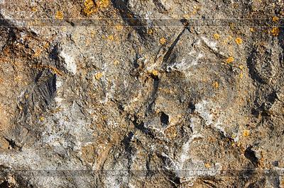 Stone surface selten mit Flechten | Foto mit hoher Auflösung |ID 3498882