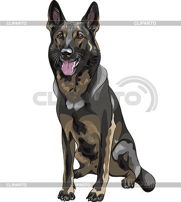 Skizze schwarzen Hund Rasse Deutscher Schäferhund | Stock Vektorgrafik |ID 3392120