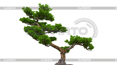 bonsai stock fotos und vektorgrafiken cliparto. Black Bedroom Furniture Sets. Home Design Ideas