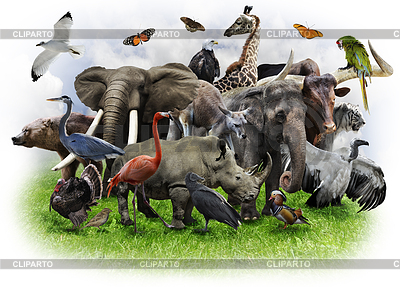 Tiere Collage   Foto mit hoher Auflösung  ID 3684413