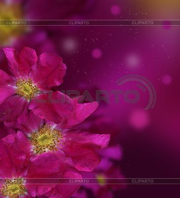 Nahtloser Hintergrund mit Rosen | Foto mit hoher Auflösung |ID 3443708