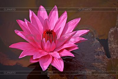 Lotus | Fotos Stock y Clipart vectorial EPS | CLIPARTO