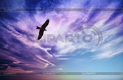 Raubvogel fliegi im blauen bewölktem Himmel | Foto mit hoher Auflösung |ID 3564506