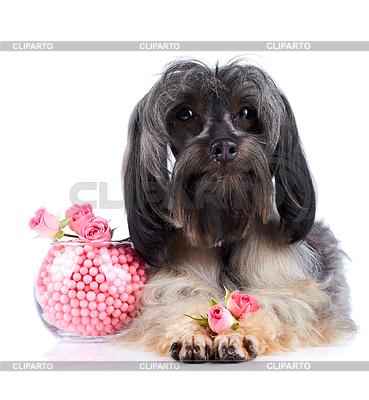 Dekorative doggie und Vase mit Perlen und Rosen | Foto mit hoher Auflösung |ID 3702999