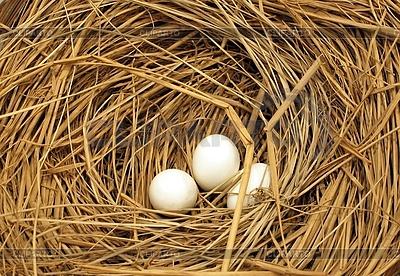 Świeże jajka | Foto stockowe wysokiej rozdzielczości |ID 3395707