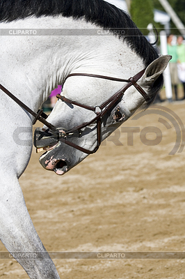 Pferd | Foto mit hoher Auflösung |ID 3434081
