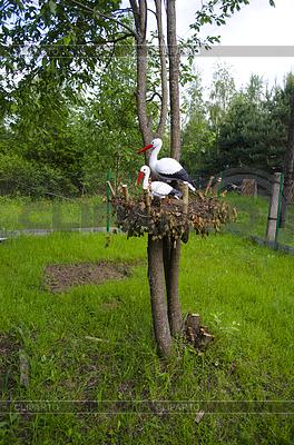 Bociany na drzewie | Foto stockowe wysokiej rozdzielczości |ID 3447318