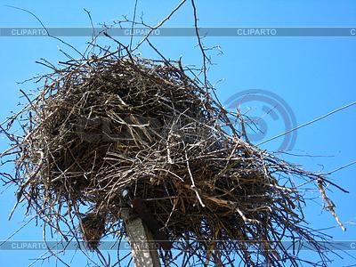 Nest der Störche im Dorf | Foto mit hoher Auflösung |ID 3469588