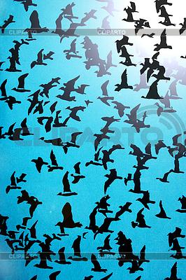 파란색 배경에 조류의 실루엣의 집합 | 높은 해상도 그림 |ID 3583199