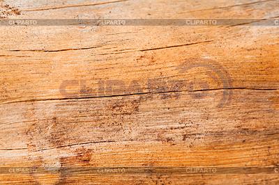 티크 나무  스톡 사진 및 벡터 EPS 클립 아트  CLIPARTO